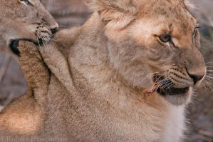 A mouthful of back by robbobert