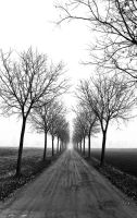 road and fog by canca