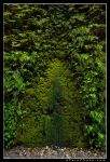 Moss Gate by aFeinPhoto-com