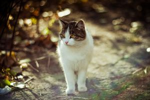 cat by Emmatyan