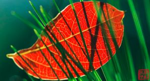Leaf on the green by juhitsome