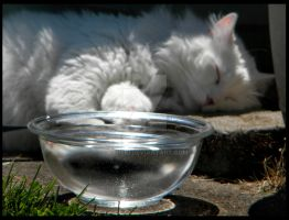 Water Bowl by Kimiski