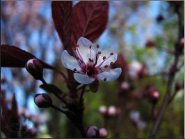 The breath of spring part 2 by fiamen