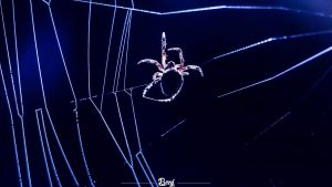 Spider by Benjhs