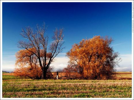 Last colors of autumn by mjagiellicz
