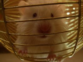 my hamster by bekchi