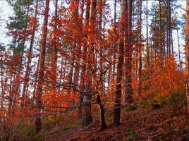 Colorful Woods by ThornyVine