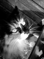 Kitty Cat 3 by musicismylife2010
