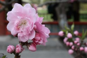 Blossom for me, wouldya? by koco48