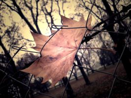 leaf by demor