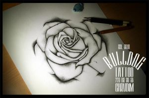 Tattoo Bulldog Chrudim Rose Drawing by TattooBulldog