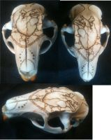 skull with branding anatomical heart by Blutbraut