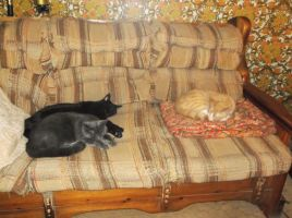 On the couch (2): Pookie, Phantom (RIP), Scotty by MystMoonstruck