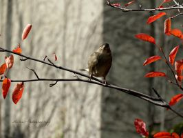 Birdy Looking at Me by Michies-Photographyy