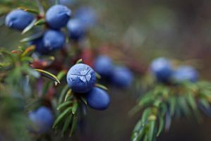 Mountain Berries by HellMina