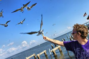 Feeding the gulls! by AlexReedWhite
