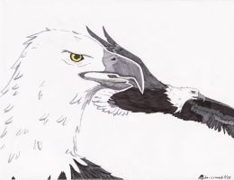 The Eye of the Eagle by de-crnmeistr