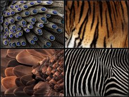 Patterns Fur And Feathers by cycoze