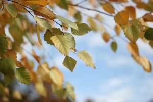Autumn Leaves by Wfate