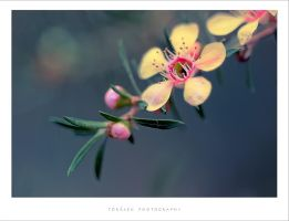 Japanese by torasenfoto