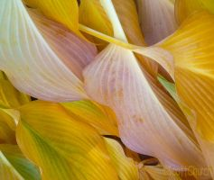someleaves by scottchurch
