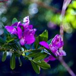 Colorful Day by WhiteBook