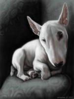 Ghost Bull Terrier by SadieMae
