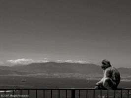 Contemplating by schelly