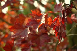 Red by wera100243