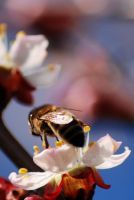 Bee. by Drvall