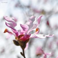 Le defroissement du printemps by hyneige