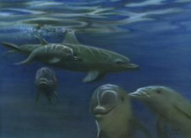 Dolphins by ChristopherWillmot