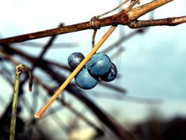 The last grape by ChrisPhotographer