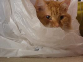 Squirrel in a Bag - Close Up by 0celluloid-dreamer0