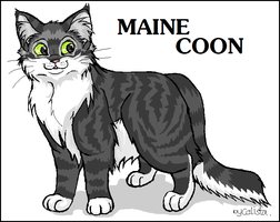 Maine Coon by calistamonkey