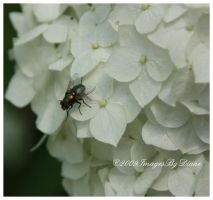 Blow Fly by SassyPants61762