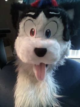Harvey Husky Head Done! by unknown0species