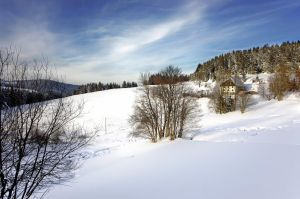 Black_Forest_afternoon_jm2265 by joergens-mi