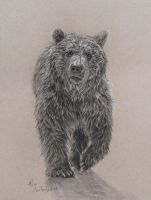 June 13 bear sketch by Earleywine