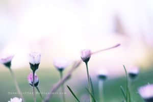Daisies by Schnitzelyne