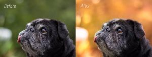 BEFORE AND AFTER Editing in Photoshop CS6 by ArcticPug
