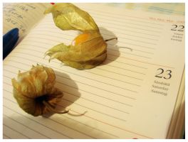 physalis duo 1 by moodyline