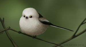 Long-tailed tit by jrtracey