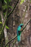 quetzal by yeejose