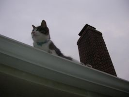 chaos cat - roof tops by whitedragonguardian