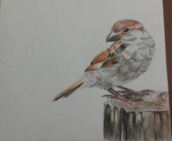 Little Bird in Water Color by WolfSerenade