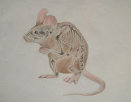 A. Romero Colored Pencil Mouse and Skeleton by alliromero79