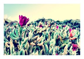 Succulent Flowers by CaseyAdamF