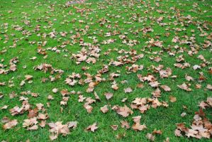 Field of Leaves by Scorpius02