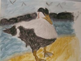 water colour painting of a eider  duck by kk20152d
